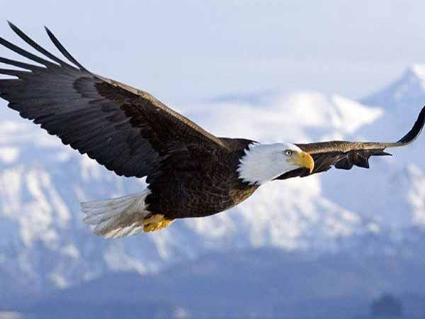 Nằm mơ thấy đại bàng có điềm báo gì, đánh con gì ăn chắc