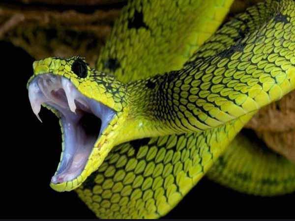 Nằm mơ thấy rắn cắn có điềm báo gì, đánh con gì ăn chắc